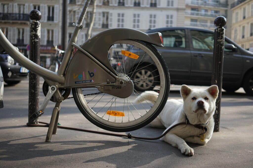 Touche pas à mon vélo